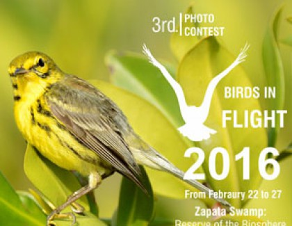 3rd. PHOTO CONTEST BIRDS IN FLIGHT 2016 Dal 22 al 27 Febbraio 2016