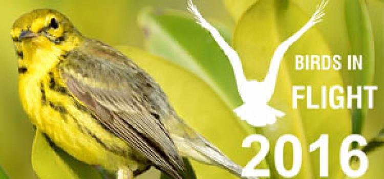 3rd. PHOTO CONTEST BIRDS IN FLIGHT 2016 Dal 22 al 27 Febbraio 2016